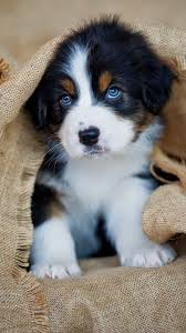 puppy wallpaper for android 2020