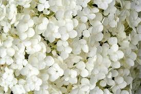 صور ورد ابيض صور زهور بيضاء بوكيه ورد ابيض