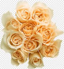 باقة من الورود حديقة الورود ترتيب الزهور صورة تنسيقات الملفات Png