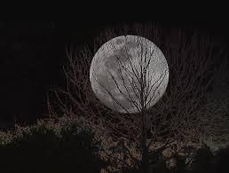 Moon Through Trees Digital Art By Chauncy Holmes
