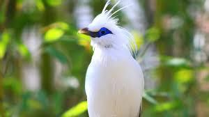 اجمل طيور العالم لن تصدق جمالها