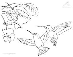1001 Kleurplaten Dieren Vogels Kleurplaat Kolibri