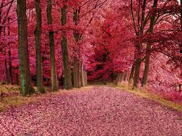 أجمل صور الورود والأشجار 2018 للكمبيوتر والأندرويد Pictures Of