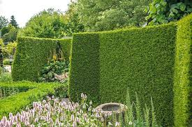 Block Unsightly Views Evergreen Screening Plant Solutions