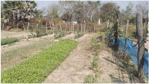 vegetable gardens in cambodia change