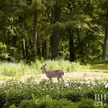 diy deer repellent better homes gardens