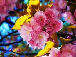 beautiful flowers hd wallpaper hd