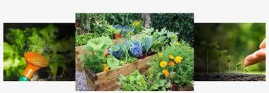 small raised vegetable garden layouts