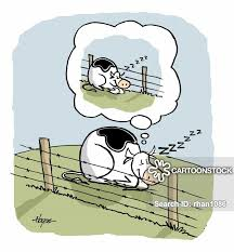 Fence Cartoons And Comics Funny Pictures From Cartoonstock