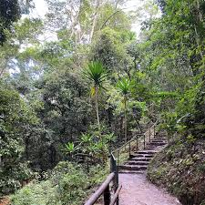 Karura Forest (Nairobi) - 2020 All You Need to Know BEFORE You Go ...
