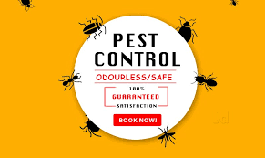 Shree Ganesh Pest Control, Warje - Residential Pest Control Services in  Pune - Justdial