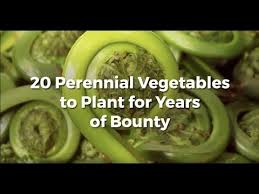 20 perennial vegetables to plant once