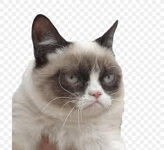 grumpy cat kitten desktop wallpaper