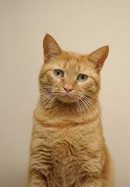 Orange Cat by Akimasa Harada | Orange tabby cats, Tabby cat, Cats