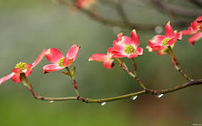 Image result for rain in spring photos