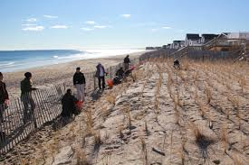 Native Plantings And Sand Fencing Help Beach Dune Restoration The Pie Rivers Restoration Partnership