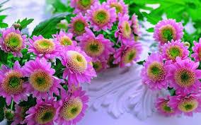 ورد وزهور صباح الخير