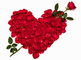 أجمل صور الورود والزهور الحمراء