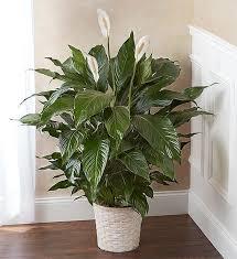 easiest indoor houseplants that