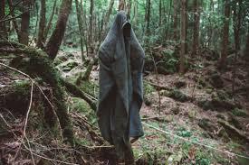 Dentro la foresta dei suicidi: l'orrore nel mar nero di alberi ...