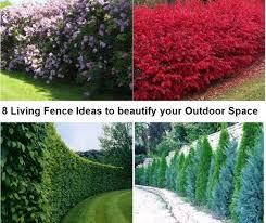 8 Living Fence Ideas To Beautify Your Outdoor Space Matchness Com Living Fence Hedges Landscaping Fence Options