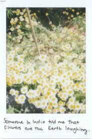 flowers quotes tumblr