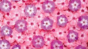 pink flower wallpaper backgrounds