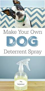 diy dog deter spray helps stop