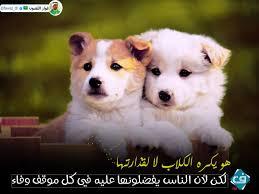 فخامة مصور No Twitter هو يكره الكلاب لا لقذارتها لكن لأن الناس