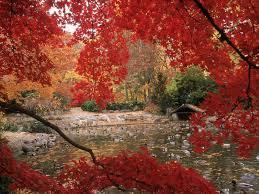 best 63 autumn wallpaper on