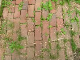diy weed weeds