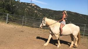 Horse dies after being bitten by rattlesnake in Jamul | cbs8.com