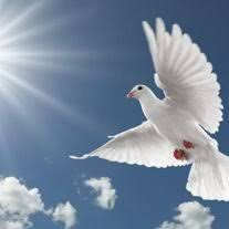 Obituary of Adele Pauline Ward | Funeral Homes & Cremation Services...