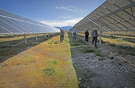 Desert Solar Farms Can Improve Tortoise Habitat Pv Magazine International