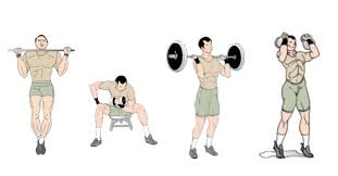 bodybuilding workouts muscle building