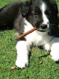 Dog Run Ideas How To Build A Backyard Dog Run Install It Direct