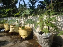 micro farm and vegetable terrace garden