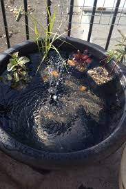 pond in a pot with solar powered water