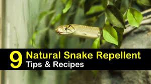 9 Fast Easy Homemade Snake Repellent Recipes