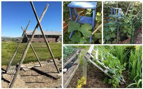 Clever Diy Cucumber Trellis Ideas Garden Lovers Club