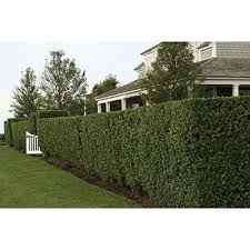 10 Ways To Add Privacy To Your Yard Privacy Landscaping Backyard Fences Backyard Privacy