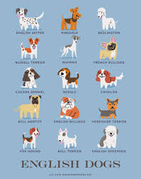 dogs of the world cute posters show