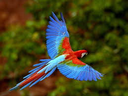 beautiful birds wallpapers pictures 456