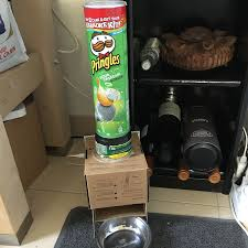 diy smart automatic pet feeder with