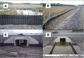 Mitigating Reptile Road Mortality Fence Failures Compromise Ecopassage Effectiveness