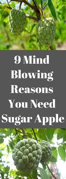 Pin by Abhijit Shah on Eating Healthy | Sugar apples, Mind blown, Health  guide