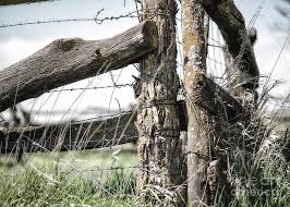 Rural America Rustic Old Wooden Fence Post With Barb Wire In Axtell Kansas Photograph By James Hendrix