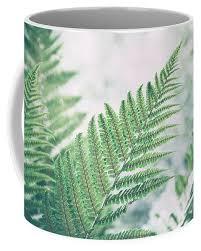 Fern Leaves Coffee Mug For Sale By Veronika Verebryusova Mugs Fern Pattern Mugs For Sale