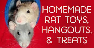 cages and accessories for pet rats