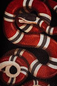 gucci snake iphone 7 wallpapers top